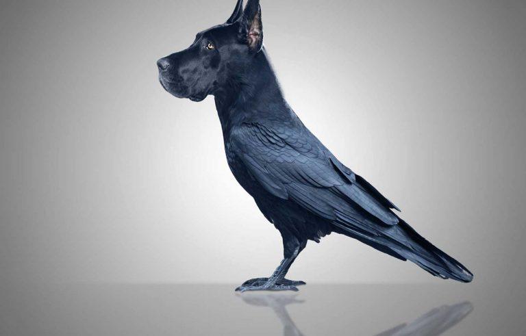 Hhibrid pomegju kuce i ptica - Graficki dizajn, Хибрид помеѓу куче и птица - Графички дизајн