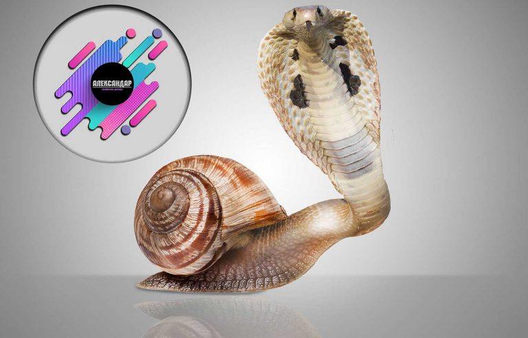 Hibrid pomegju zmija i polzav - Graficki dizajn, Хибрид помеѓу змија и полжав - Графички дизајн