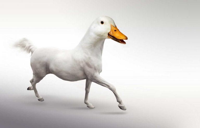 Hibrid pomegju Konj i Patka - Graficki dizajn, Хибрид помеѓу Коњ и Патка - Графички дизајн